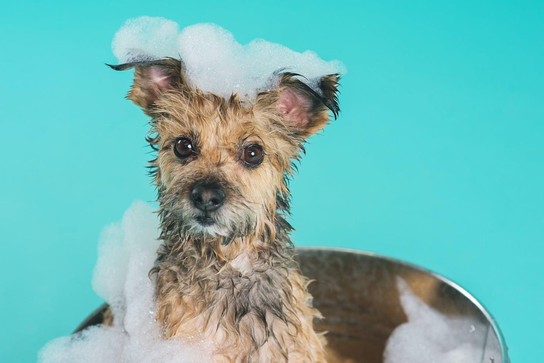 mutt_hutt_dog_cat_pet_grooming_saskatoon-19